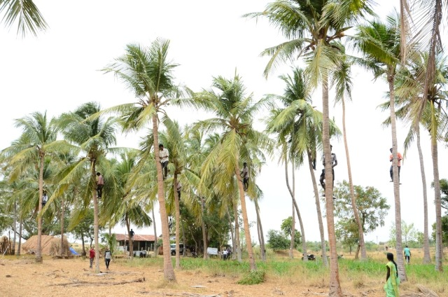 Coconut Tree climber training to Rural youth - photo - 138