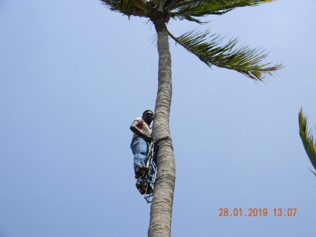 Coconut Tree climber training to Rural youth - photo - 142