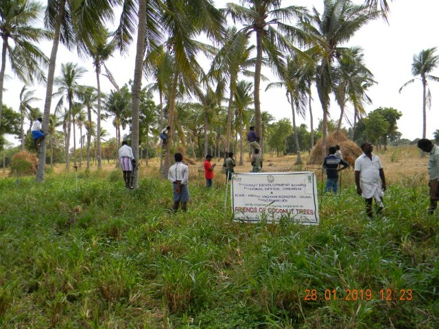 Coconut Tree climber training to Rural youth - photo - 141