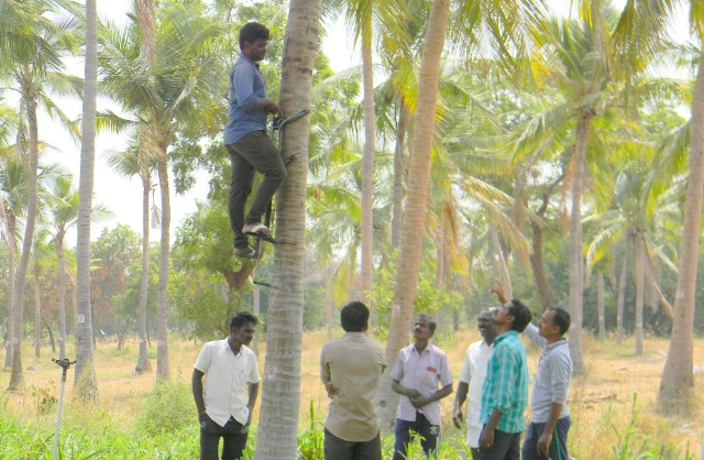 Coconut Tree climber training to Rural youth - photo - 151