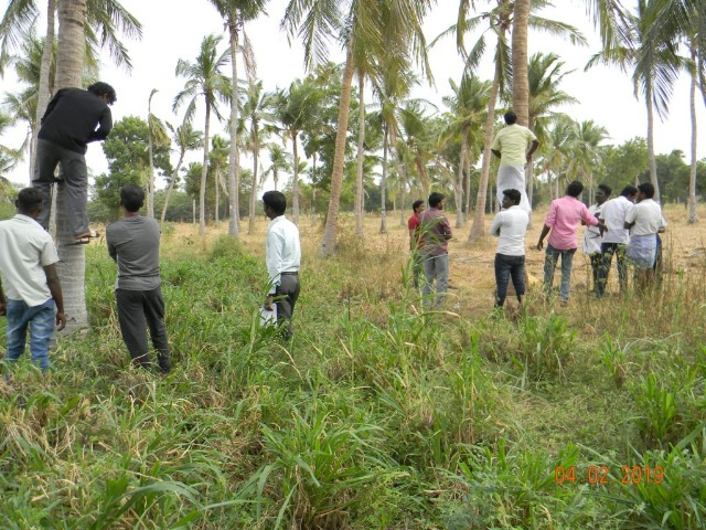 Coconut Tree climber training to Rural youth - photo - 148