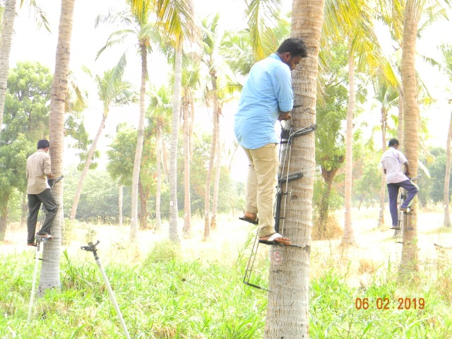 Coconut Tree climber training to Rural youth - photo - 152