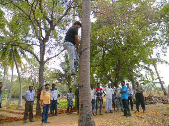 Coconut Tree climber training to Rural youth - photo - 158