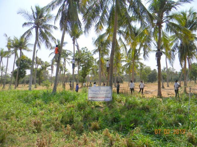 Coconut Tree climber training to Rural youth - photo - 155