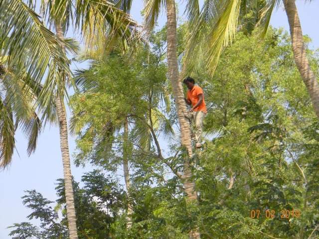 Coconut Tree climber training to Rural youth - photo - 154