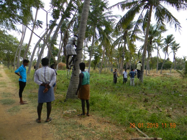 Coconut Tree climber training to Rural youth - photo - 161