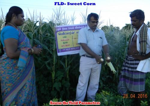 Groundnut field assessment
